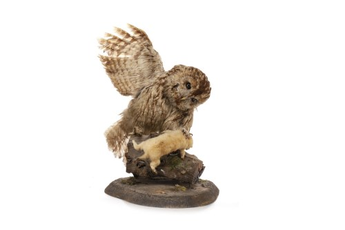 Lot 1631-EARLY 20TH CENTURY TAXIDERMY GROUP OF A TAWNY OWL ...