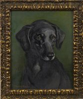 Lot 463 - BLACK LABRADOR, AN OIL BY JOHN MURRAY THOMPSON