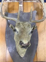 Lot 50-A MOUNTED STAG'S HEAD