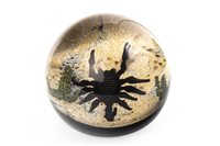Lot 1265 - A WILLIAM MANSON SNR. FOR CAITHNESS 'SCORPION' PAPERWEIGHT