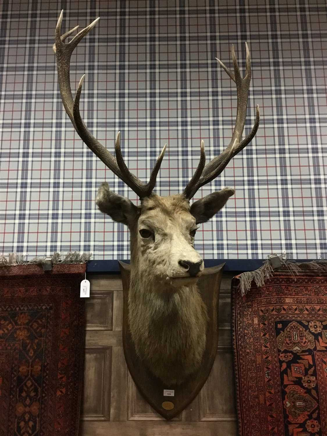 Lot 1604-A MID 20TH CENTURY TWELVE POINT STAG'S HEAD