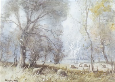 Lot 612-SHEEP GRAZING, A WATERCOLOUR BY TOM CAMPBELL