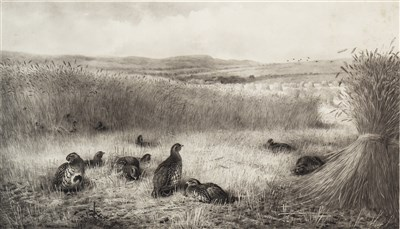 Lot 482-SEPTEMBER PARTRIDGE, AN ENGRAVING BY ARCHIBALD THORBURN