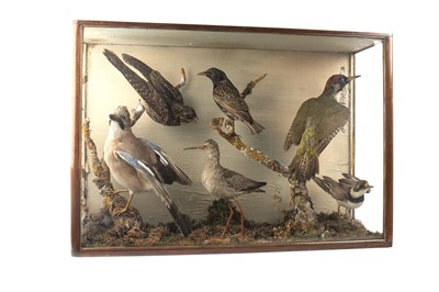 Lot 1627 - A VICTORIAN ORNITHOLOGICAL DISPLAY BY JOHN THOMSON OF STOBO