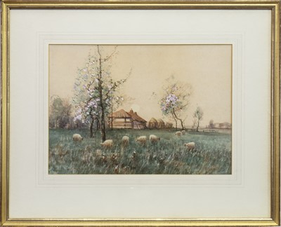 Lot 403-SHEEP GRAZING, A WATERCOLOUR BY TOM CAMPBELL