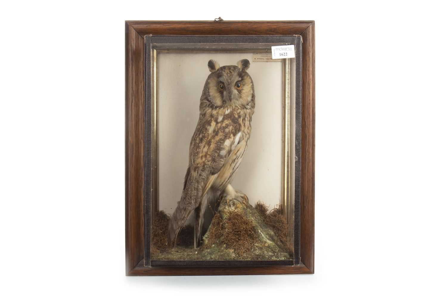 Lot 1622-AN EARLY 20TH CENTURY TAXIDERMY OF A LONG EARED OWL