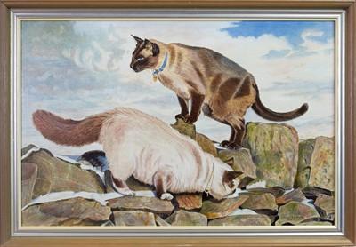Lot 431-SIAMESE CATS, AN OIL BY MUREL FIFE FAIRLIE