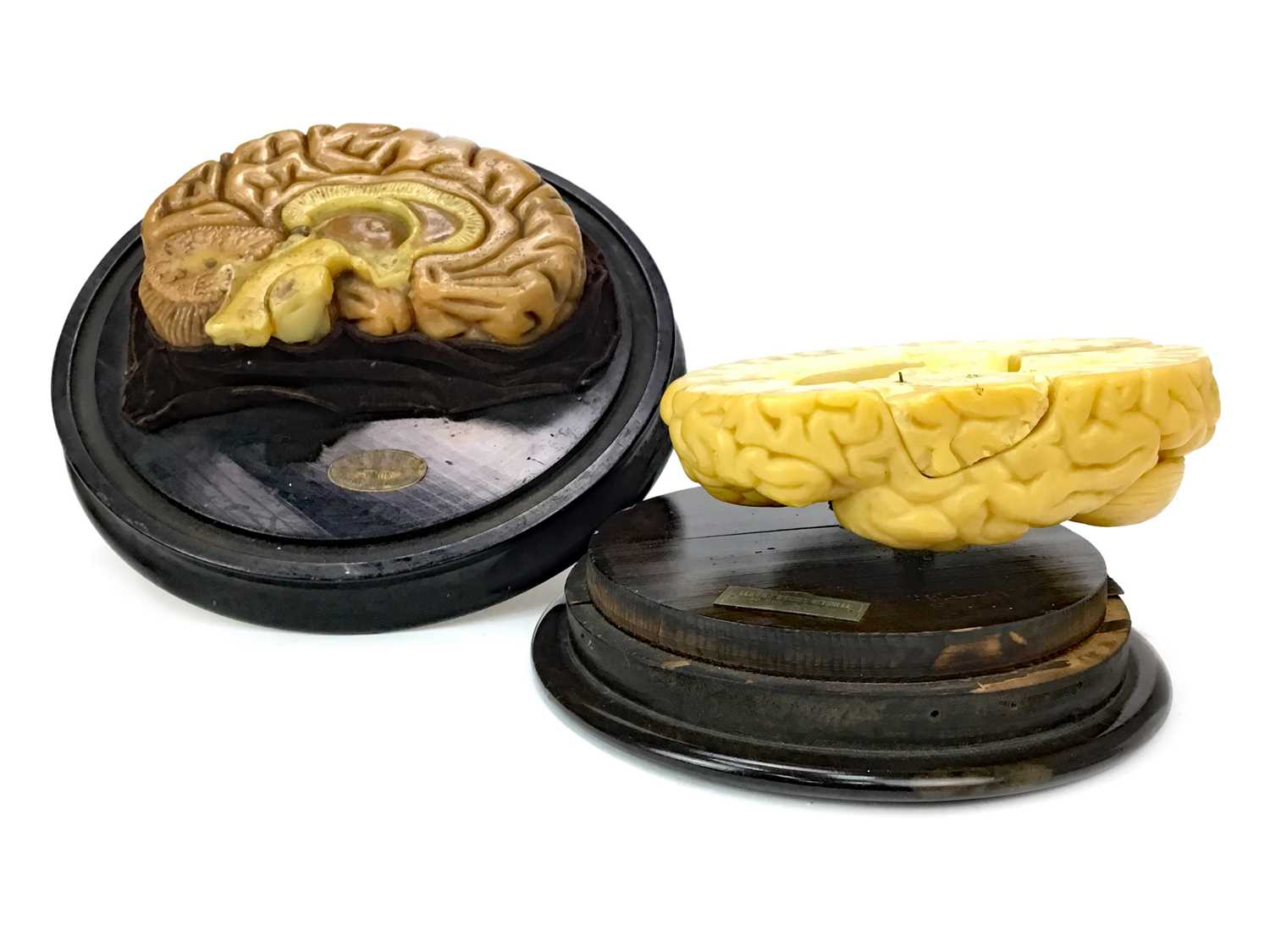 Lot 1124 - TWO FRENCH WAX ANATOMICAL MODELS OF A CUT AWAY BRAIN