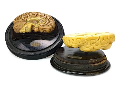 Lot 1124-TWO FRENCH WAX ANATOMICAL MODELS OF A CUT AWAY BRAIN