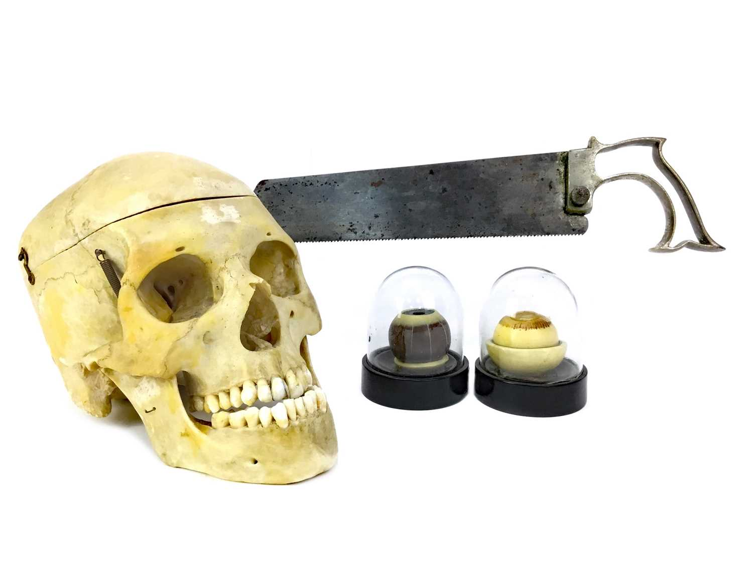 Lot 1127 - AN ANATOMICAL HUMAN SKULL AND OTHER MEDICAL ARTEFACTS