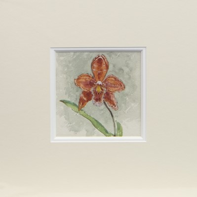 Lot 78-A COLLECTION OF ORCHIDS, FIVE WATERCOLOURS BY ROBERT EADIE