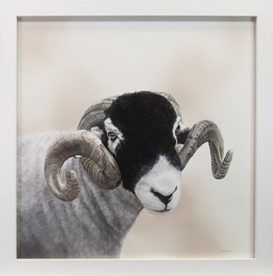 Lot 152 - STARE DOWN, AN OIL BY TONI HARGREAVES
