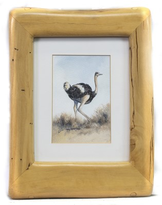 Lot 590 - SOUTH AFRICAN OSTRICH, A WATERCOLOUR BY MARY MARSICANO
