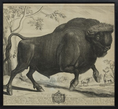 Lot 23 - BISON, AN 18TH CENTURY COPPER ENGRAVING