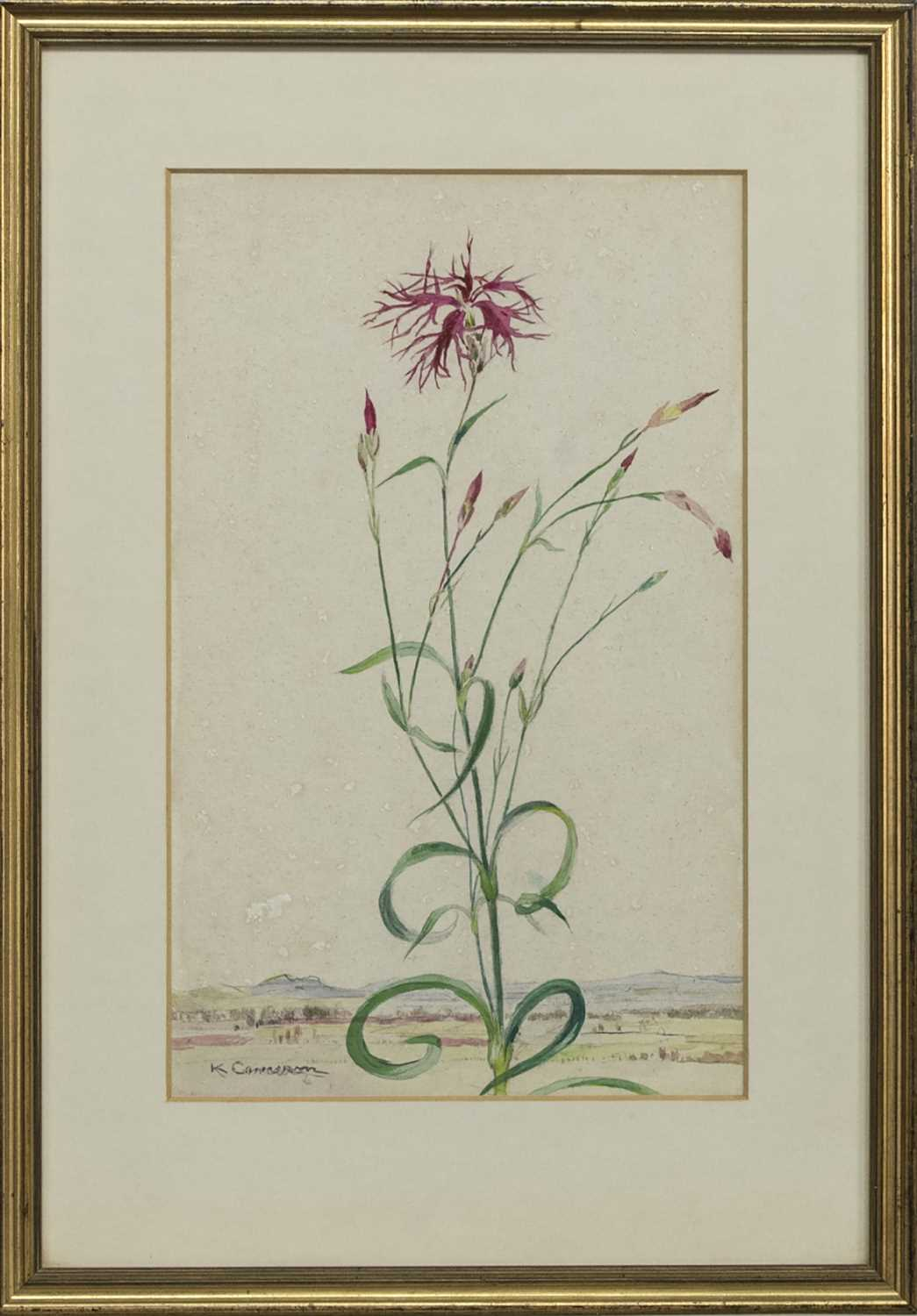 Lot 12 - FLOWER STUDY, A WATERCOLOUR BY KATHARINE CAMERON