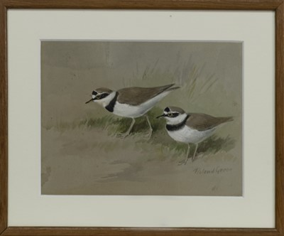 Lot 554 - LITTLE RINGED PLOVER, A WATERCOLOUR BY ROLAND GREEN