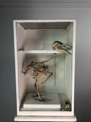 Lot A CASED SKELETON OF A BIRD