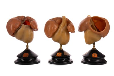 Lot 1154 - A COLLECTION OF THREE LATE 19TH / EARLY 20TH CENTURY WAX ANATOMICAL STUDIES