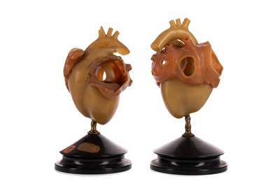 Lot 1156 - TWO LATE 19TH / EARLY 20TH CENTURY WAX ANATOMICAL STUDIES
