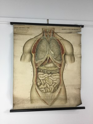 Lot 1162 - TWO FROHSE ANATOMICAL CHARTS