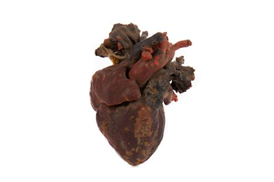 Lot 1159 - A LATE 19TH / EARLY 20TH CENTURY WAX ANATOMICAL STUDY
